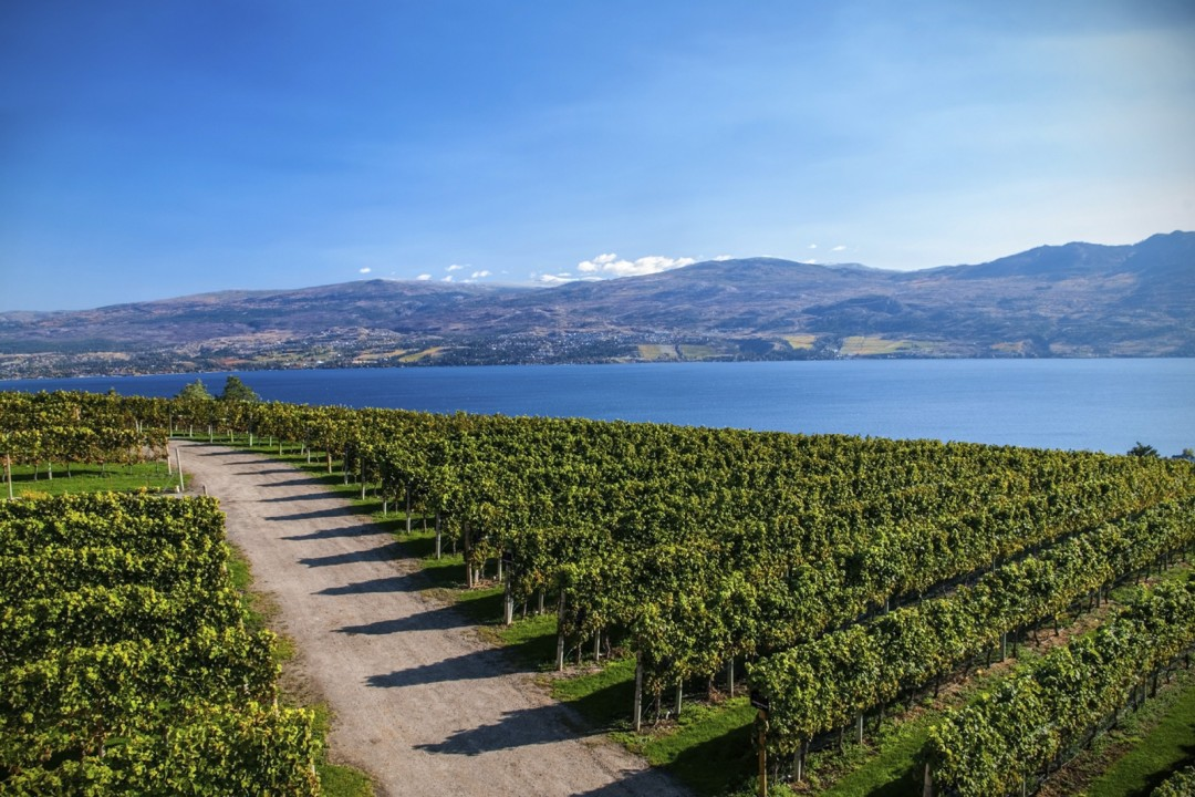 Canadian Wine Tours - British Columbia